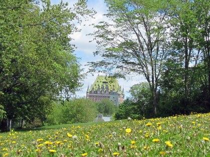 Dandelion-Fields-Chateau-Frontenac-Quebec-City