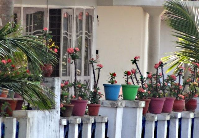 """<img src=""""cc-dsc02052.jpg"""" alt=""""Flower pots along Kerala Backwaters Kochi India"""" />"""