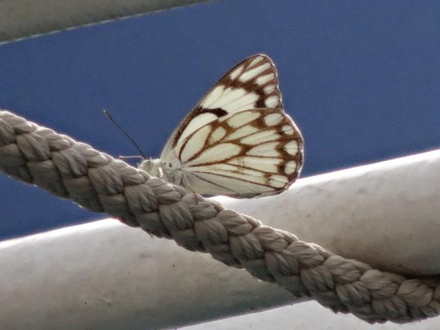 "<img src=""39a42-dsc02290.jpg"" alt=""Butterfly"" />"