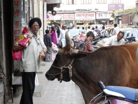 "<img src=""dsc02194_web.jpg"" alt=""Local Man Cow Mumbai India"" />"