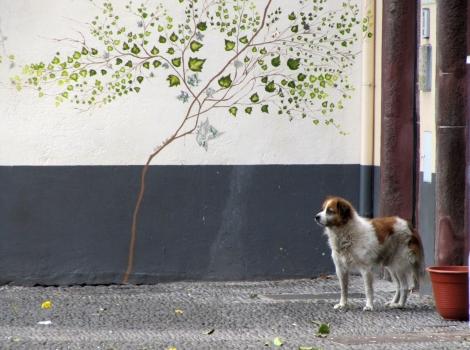 """<img src=""""img_3747_web.jpg"""" alt=""""Arte de Portas Abertas with dog"""" />"""