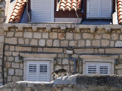 "<img src=""img_1083_web.jpg"" alt=""Dubrovnik Walled City"" />"