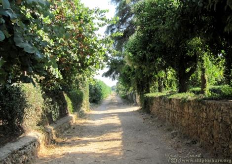 """<img src=""""img_1892_web.jpg"""" alt=""""Mercouri Vineyards and Winery"""" />"""